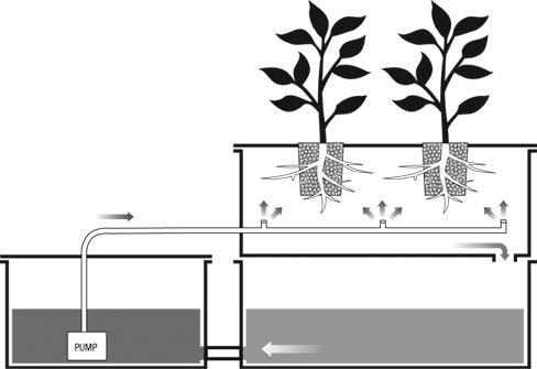 Aeroponics System
