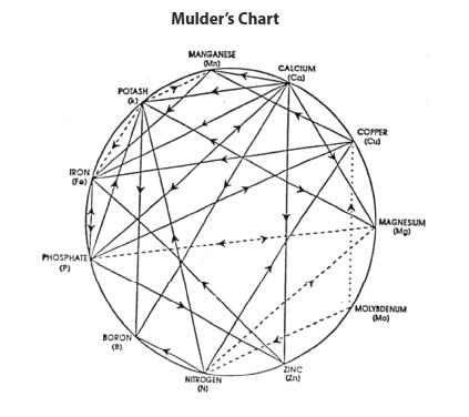 mulders_chart