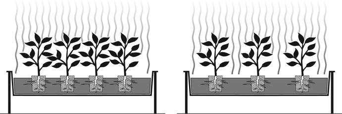 Plant Spacing Under HID Lighting