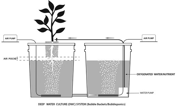 Hydroponic Nutrient Science Hydroponics