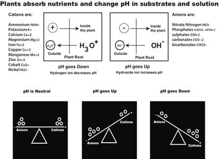 pH-change-image-site